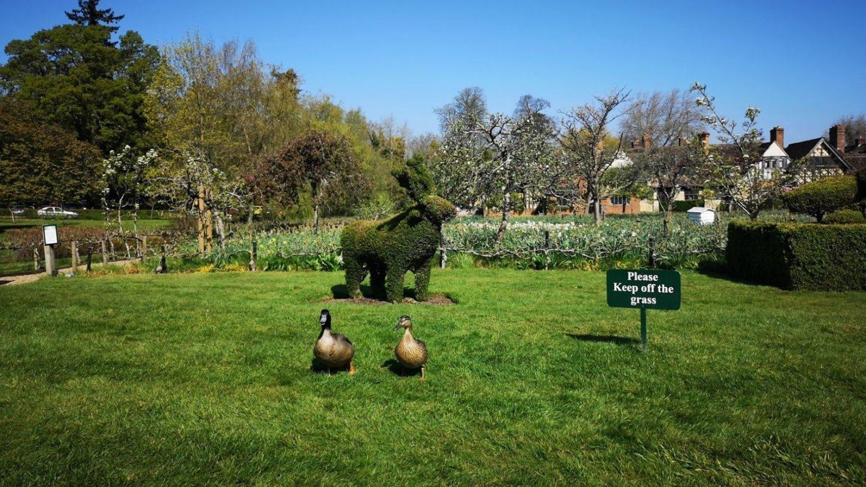 Hever castle deer topiary