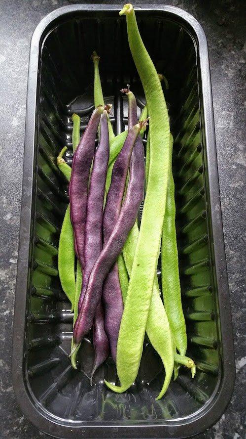 runner beans harvest