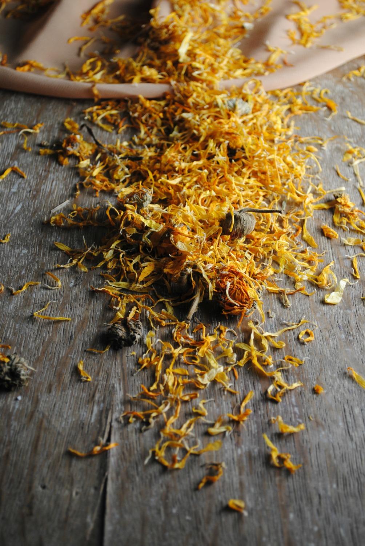 dried-marigold-margarita-VianneyRodriguez