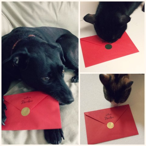 Hallmark Cards Sealed with a kiss!  #FunnyPetCards  #cbias