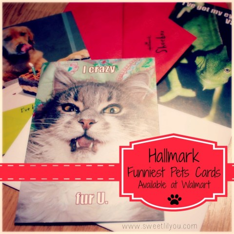 Hallmark Funniest Pets cards at Walmart!  #FunnyPetCards  #cbias