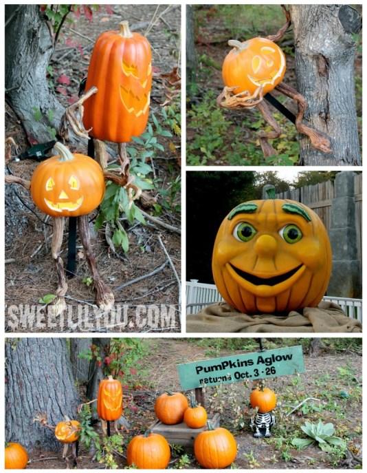 Pumpkins Aglow at Edaville Carver, MA