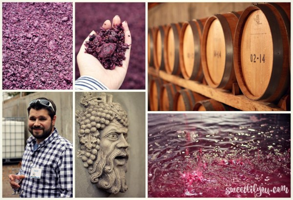Photos from Pellegrini Vineyard