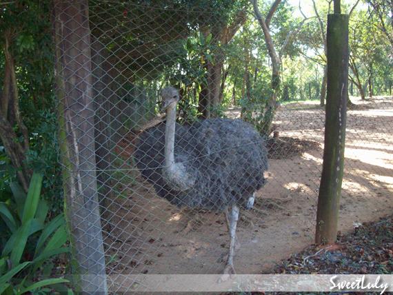 Animais Fantásticos e Onde Habitam