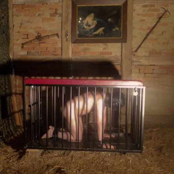 Caged in the barn