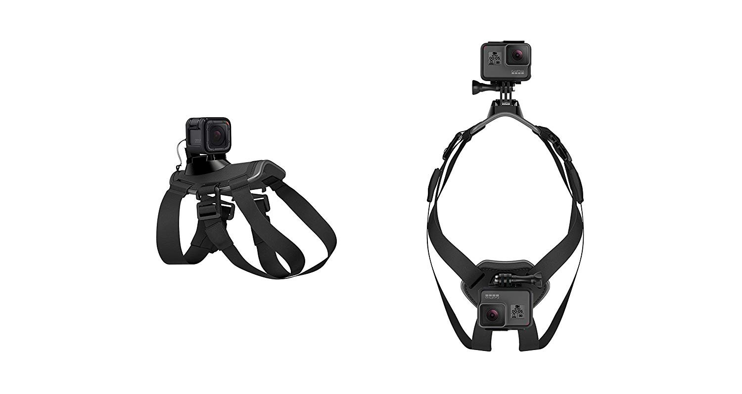 Top Best Camera Mounts For Dog In