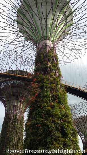 The Super Trees and the suspended bridge walkway