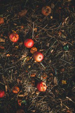 12 tips| om voedselverspilling tijdens de feestdagen te voorkomen