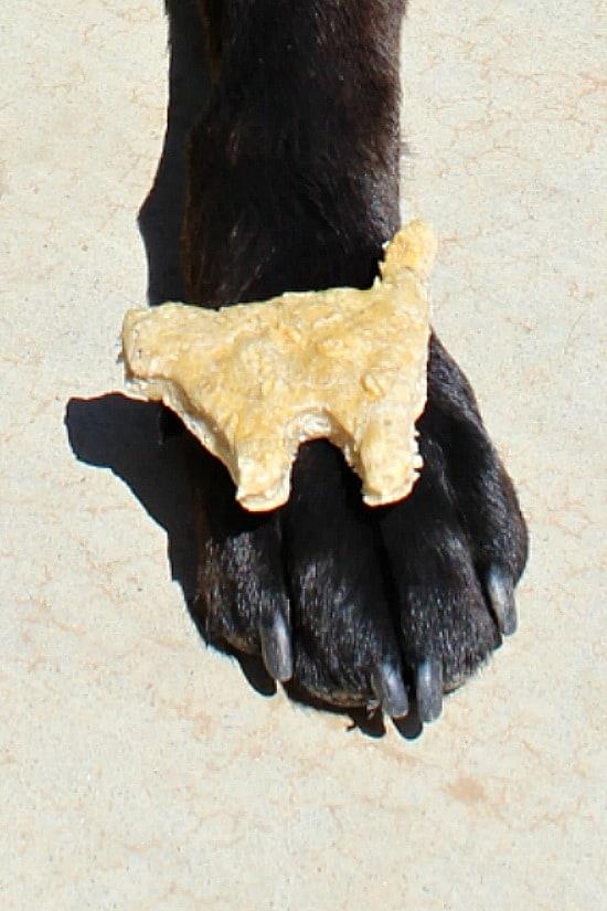 A cat-shaped dog treat sitting on Baxter's paw.