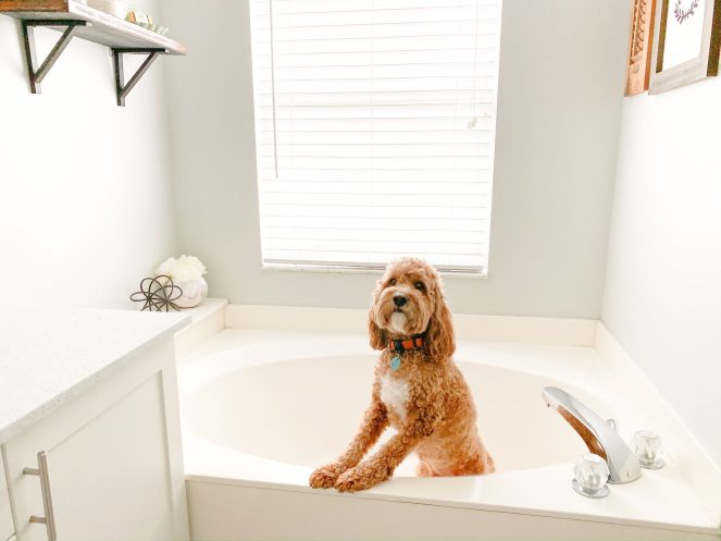 Eileen's pet approves of the new bathroom décor