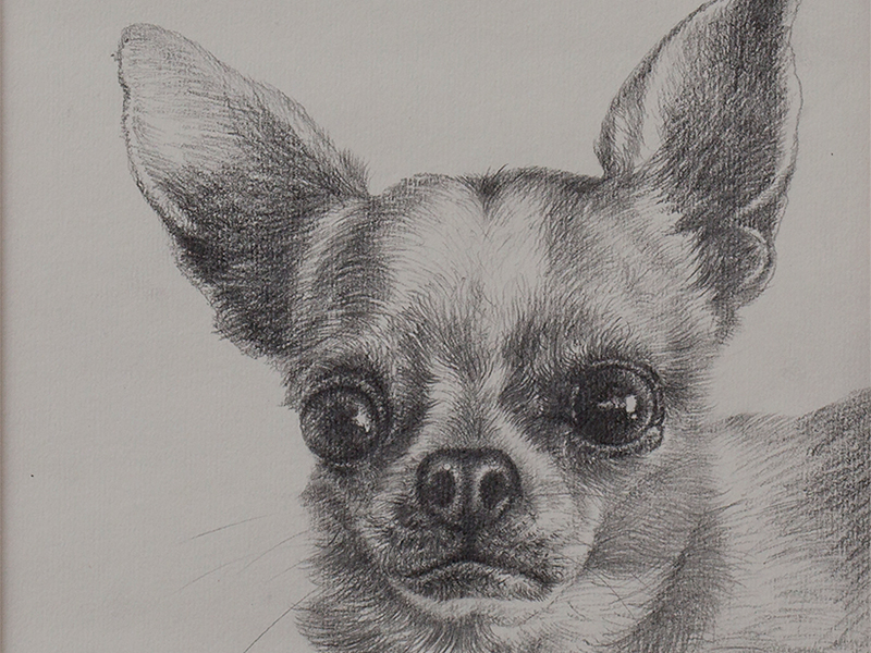 Pencil drawing of Pepper