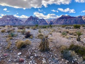 Journey to The American Southwest