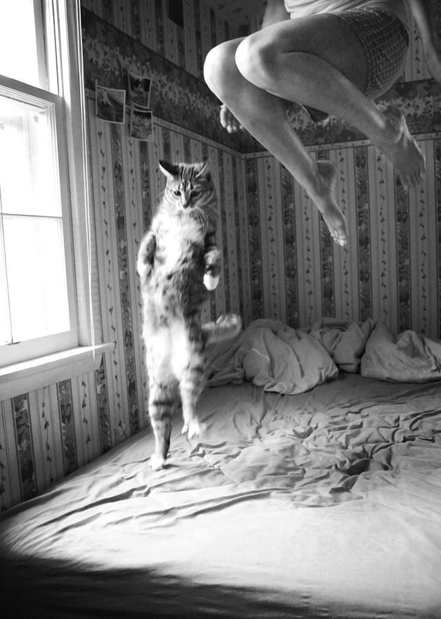 cat, i'm a kitty cat