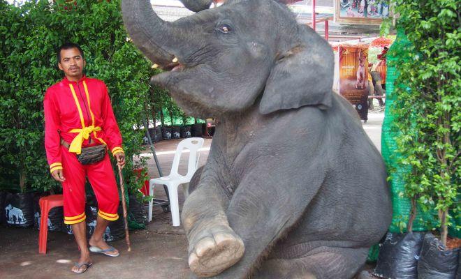 アユタヤ ゾウに乗る
