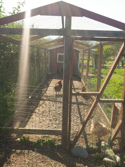 St. Helena & Frog's Leap Winery in Napa | www.sweetteasweetie.com