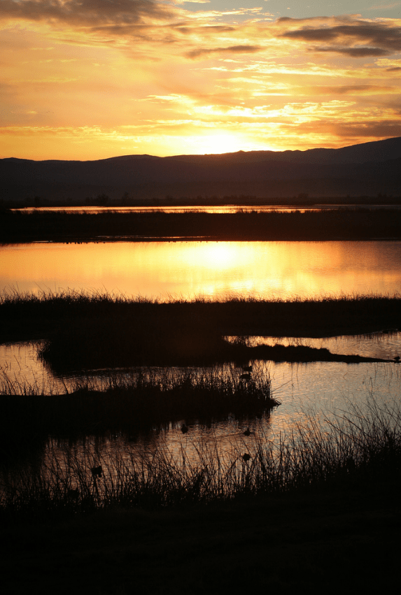 Sacramento National Wildlife Refuge | www.sweetteasweetie.com