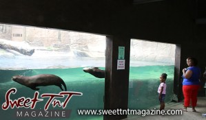 Girl in pink top looking at swimming otters through glass, plus-sized woman in blue blouse and red pants at Emperor Valley Zoo in Sweet T&T, Sweet TnT Magazine, Trinidad and Tobago, Trini, vacation, travel