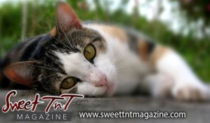 TTSPCA Kitten, Cici, models, Sweet T&T, Sweet TnT, Trinidad and Tobago, Trini, vacation, travel, fireworks article
