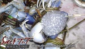 Crab eggs, Herman, Kielon Hilaire, Sweet T&T, Sweet TnT, Trinidad and Tobago, Trini, vacation, travel,