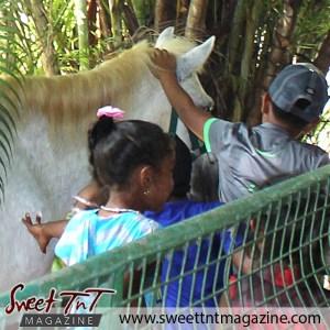 Children pet pony at Emperor Valley Zoo, animals, Sweet T&T, Sweet TnT, Trinidad and Tobago, Trini, vacation, travel, Zoorific