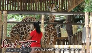 Woman feeding giraffes, Melman, Mandela, Emperor Valley Zoo