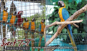 Macaws, Emperor Valley Zoo, Sweet T&T, Sweet TnT, Trinidad and Tobago, Trini, travel, vacation, animals