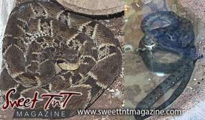 Snakes, Emperor Valley Zoo, Sweet T&T, Sweet TnT, Trinidad and Tobago, Trini, travel, vacation, animals