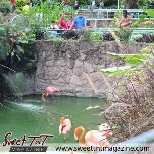 Flamingo bathe, Emperor Valley Zoo, Sweet T&T, Sweet TnT, Trinidad and Tobago, Trini, travel, vacation, animals, Zoorific