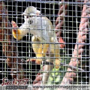 Monkey in cage, Emperor Valley Zoo, Sweet T&T, Sweet TnT, Trinidad and Tobago, Trini, travel, vacation, animals, Zoorific