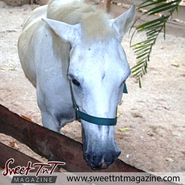 Zoo pony1