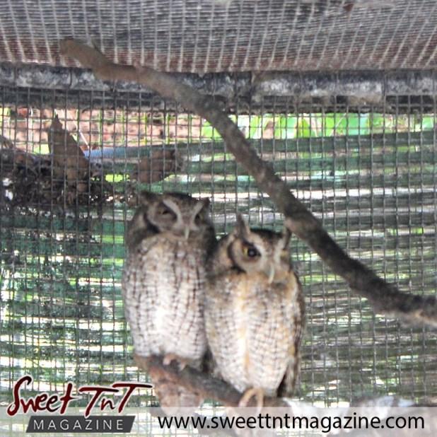zoo owls