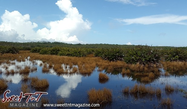 Icacos brown grass in water green grass blue sky by Marika Mohammed for story Icacos end of Trinidad in Sweet T&T, Sweet TnT, Trinidad and Tobago, Trini, vacation, travel