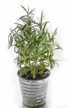 Keep insects away. Plant blur leaves green