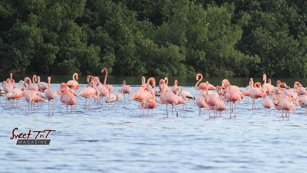 Caroni Bird Sanctuary 2021