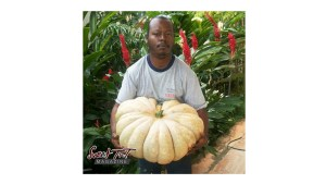 Grow food. Jevan Soyer. Pumpkin.