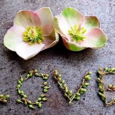 Wedding Flower Inspiration: Hellebores