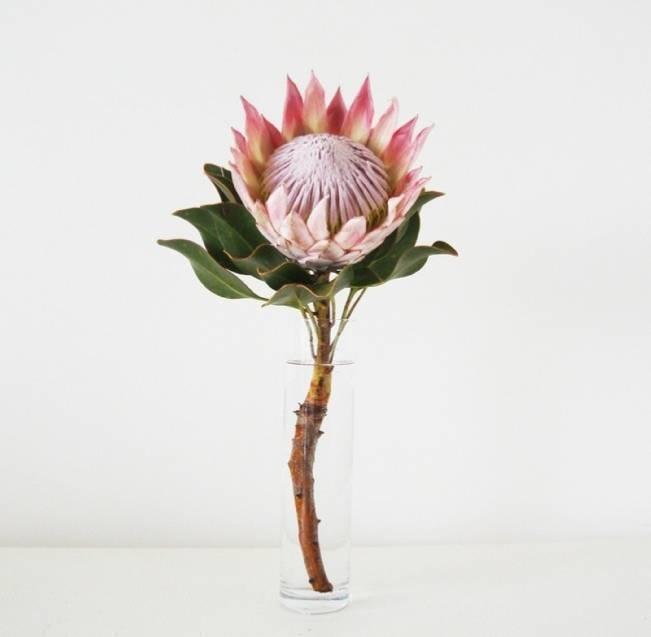king protea in vase