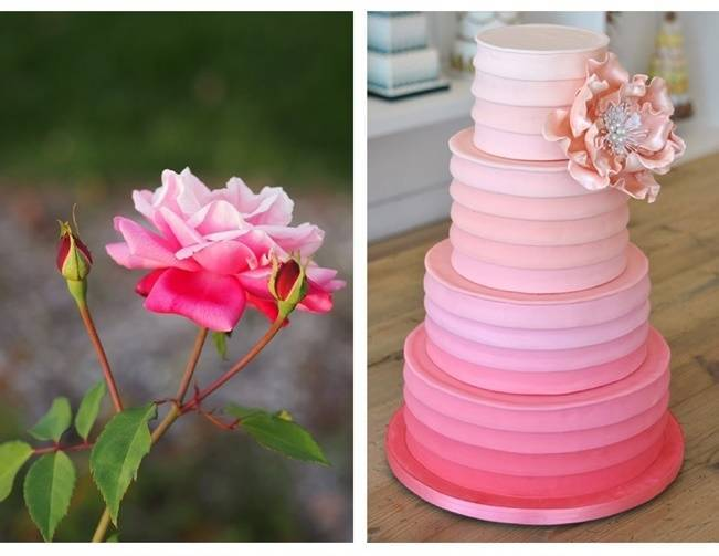 rose pink ombre cake