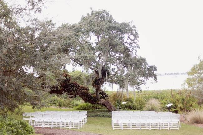 magical tree wedding