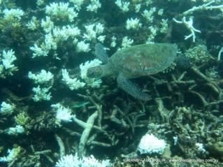 Sea turtle!