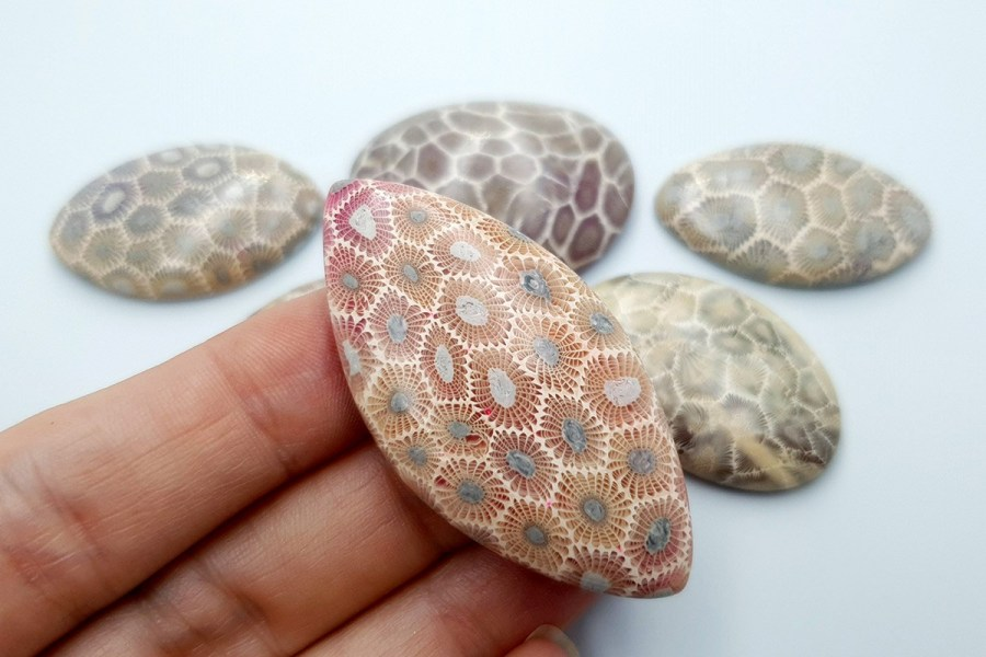 Petoskey Stone Set 01 p06