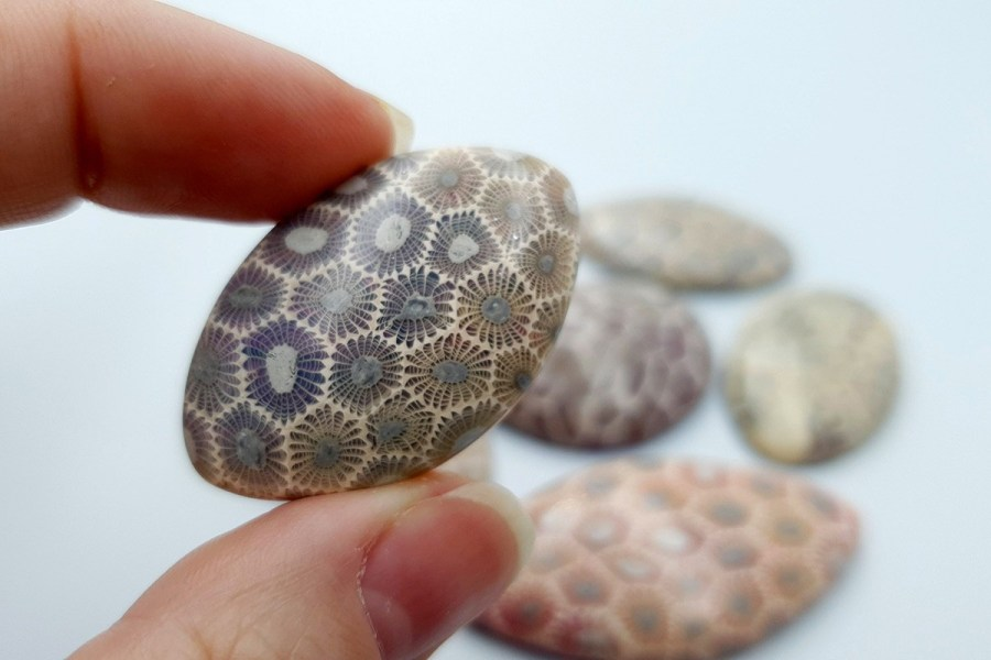 Petoskey Stone Set 01 p08