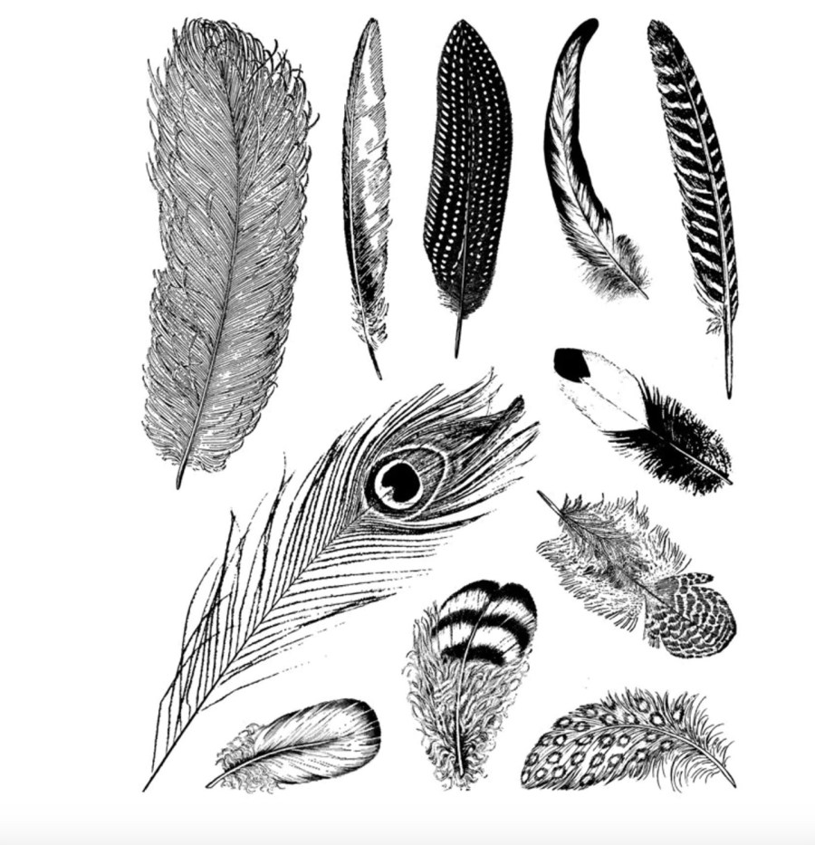 "Clear Silicone Stamp ""Large Feathers"" 4"