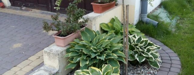 Small Front Garden Ideas