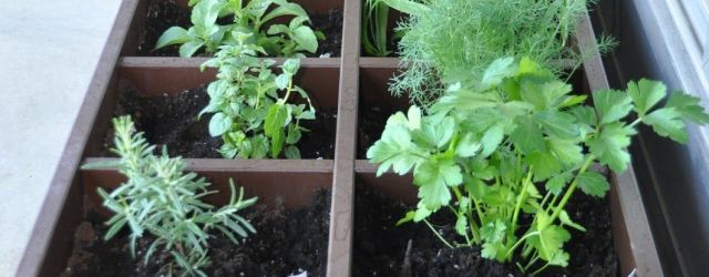 Patio Herb Garden Ideas