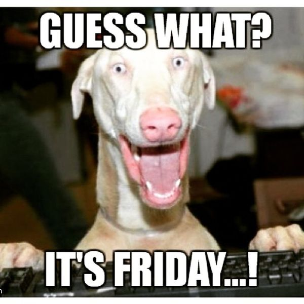 Guess what its friday?w=990 80 it's friday memes 2017,Friday Dog Meme