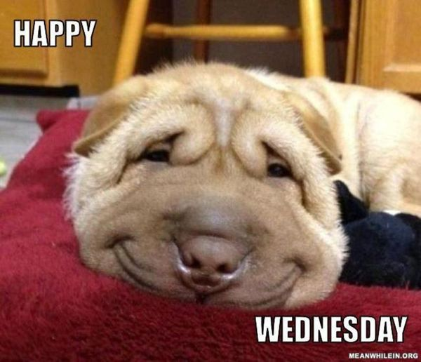 happy wednesday meme with dog