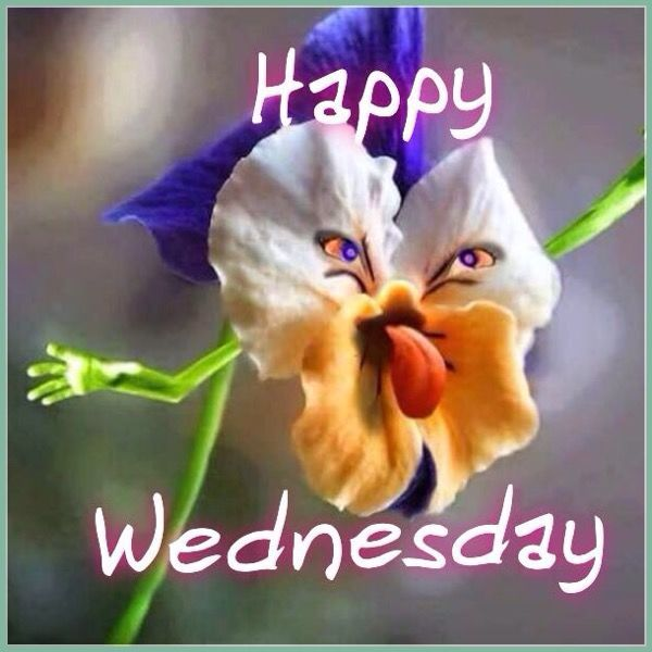 happy wednesday meme with crazy flower