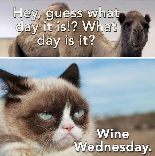 Hump Day Quotes Wednesday Funny