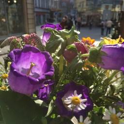 Erfurt bildhübsch